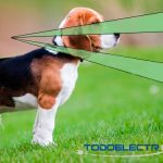 ¿Por qué los detectores de movimiento reaccionan frente a mascotas?